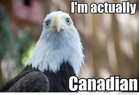 Canadian Bald Eagle Meme, www.crowdink.com