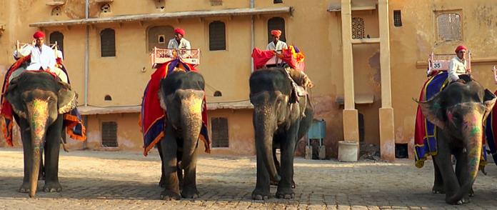 India Wildlife Tours, Elephant, Tiger, CrowdInk, Crowd Ink, Crowdink.com