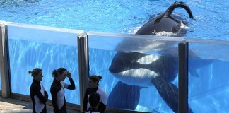Sea World (Image Source: Gold Coast Bulletin), crowdink.com.au, crowdink.com, crowd ink