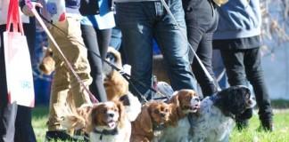 Puppies [image source: RSPCA], crowdink, crowd ink, crowdink.com.au, crowdink.com
