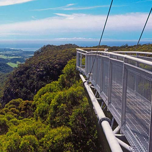 Treetop Walk [image source: westcoastwildernesstrails.co.nz], crowdink, crowd ink, crowdink.com, crowdink.com.au