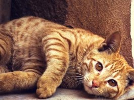 Sopurrfect is Your Number One Resource for Cat Wellbeing, crowdink.com, crowdink.com.au, crowdink, crowd ink, cat, cat wellbeing, kittens, pets,