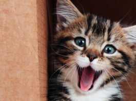 Happy Cat [image source: dailylol.com], crowd ink, crowdink, crowdink.com, crowdink.com.au