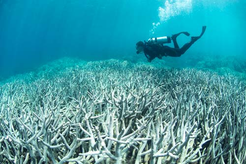 Bleached Coral [image source: slate.com], crowdink, crowd ink, crowdink.com, crowdink.com.au