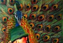 Peacock Lady by Ciska, crowd ink, crowdink, crowdink.com, crowdink.com.au