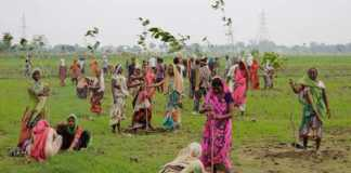 Planting in India [image source: iflscience.com], crowd ink, crowdink, crowdink.com, crowdink.com.au