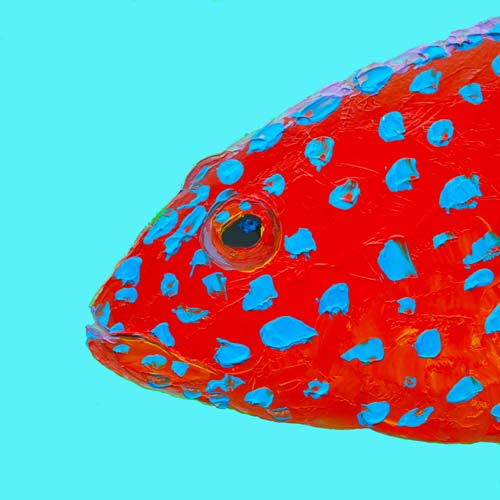 Strawberry Grouper by Jan Matson, crowd ink, crowdink, crowdink.com, crowdink.com.au