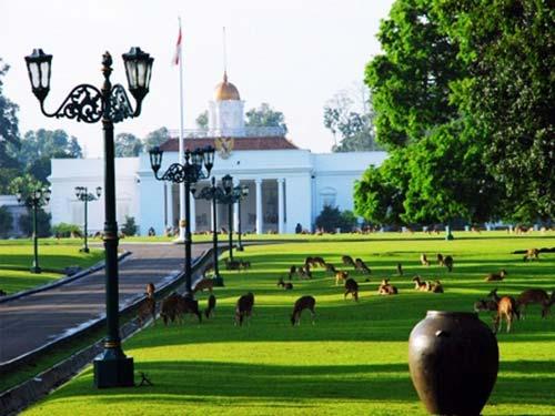 Bogor Botanical Gardens (Image Source: indonesiaunique.xyz), crowdink.com, crowdink.com.au, crowd ink, crowdink, gardens