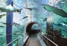 Melbourne Aquarium [image source: expedia.com.au], crowd ink, crowdink, crowdink.com, crowdink.com.au
