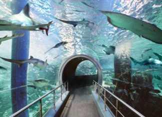 Melbourne Aquarium [image source: expedia.com.au], crowd ink, crowdink, crowdink.com, crowdink.com.au