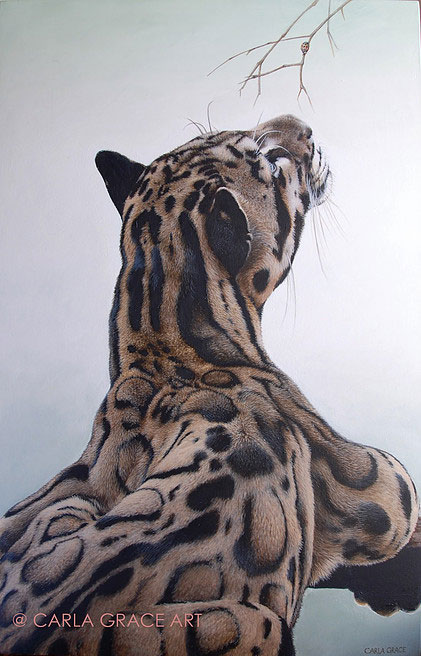 Limited Edition Prints: Awan the Clouded Leopard By Carla Grace, crowd ink, crowdink, crowdink.com, crowdink.com.au