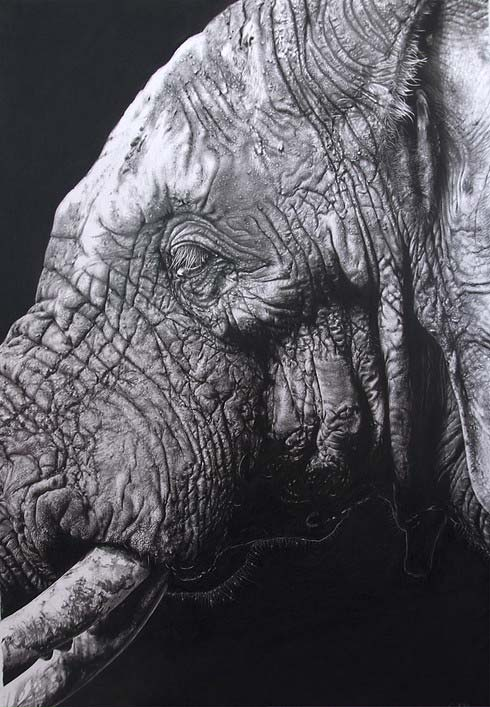 Limited Edition Elephant Drawing by Carla Grace, crowd ink, crowdink, crowdink.com, crowdink.com.au