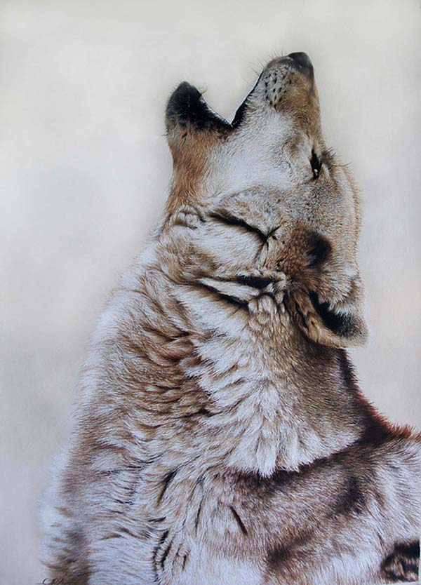 Limited Edition Print: Grey Wolf by Carla Grace, crowd ink, crowdink, crowdink.com, crowdink.com.au