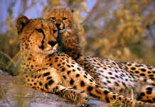 Selinda Reserve in Botswana [image source: botswanasafaripackages.com], crowd ink, crowdink, crowdink.com, crowdink.com.au