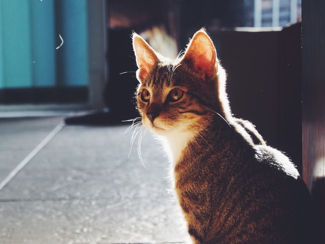 8 Things My Cat Taught Me about Mindfulness, crowd ink, crowdink, crowdink.com, crowdink.com.au