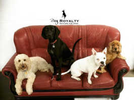 Dog Royalty caters for dogs of all ages and breeds, big and small, puppies or elderly statesmen, crowdink.com, crowdink.com.au, crowd ink, crowdink