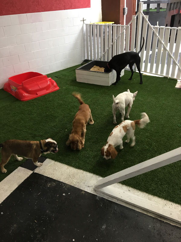 Dogs are kept engaged and stimulated through a variety of structured and unstructured play, training sessions and games, crowdink.com.au, crowdink.com, crowd ink, crowdink