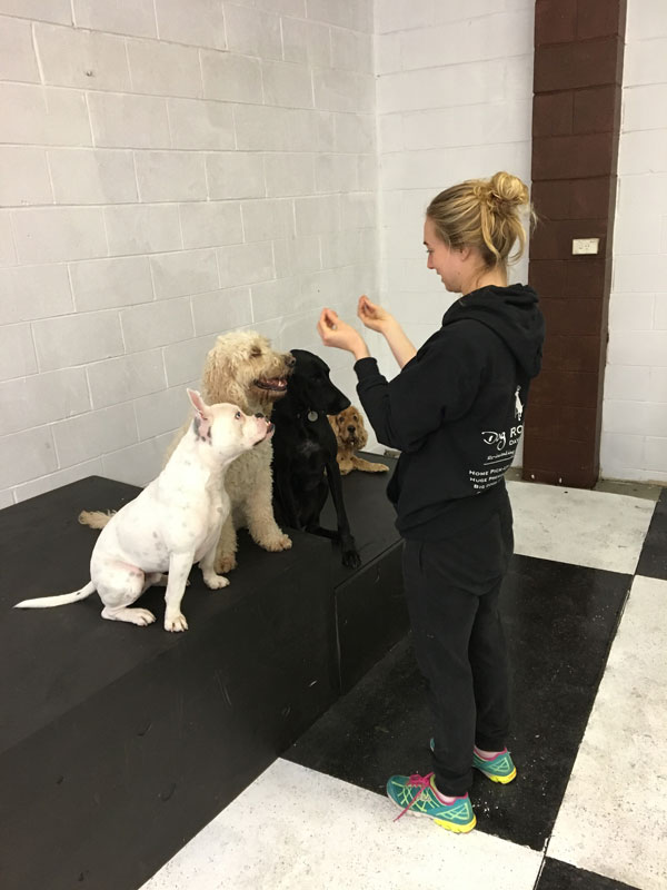 We provide free basic training for all dogs, helping to reinforce positive behaviours and ween out undesirable behaviours, crowdink.com, crowdink.com.au, crowd ink, crowdink