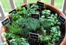 Indoor Herb Garden Ideas (Image Source: pionnersettler.com), crowdink.com.au, crowdink.com, crowd ink, crowdink