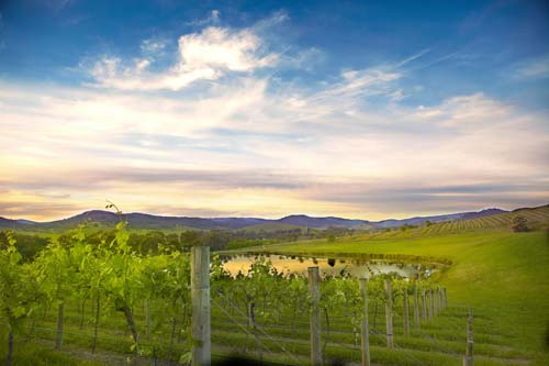 Yarra Valley (Image Source: mandalawines), crowdink.com, crowdink.com.au, crowd ink, crowdink