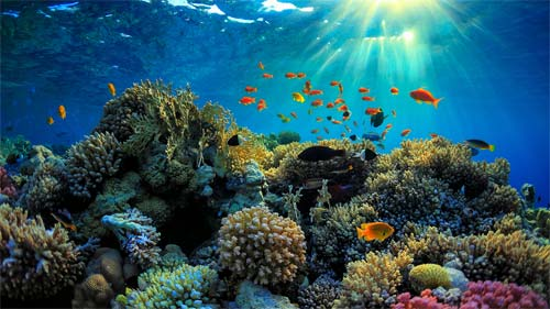 Great Barrier Reef (Image Source: Pinterest), crowdink.com, crowdink.com.au, crowdink, crowd ink