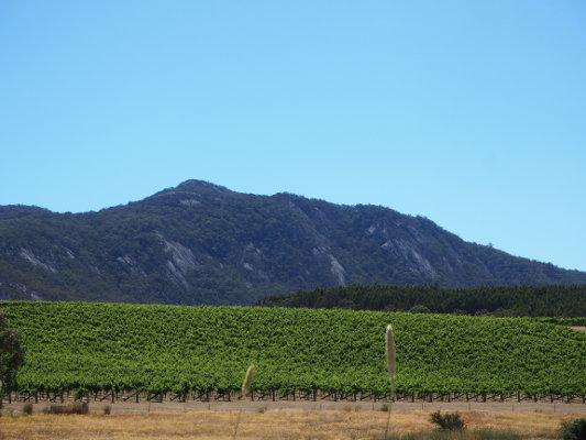Mount Langi Ghiran House Block 4, Trevor's Favourite. crowdink.com, crowdink.com.au, crowd ink, crowdink