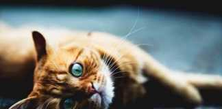 Cat lovers, crowdink.com, crowdink.com.au, crowd ink, crowdink