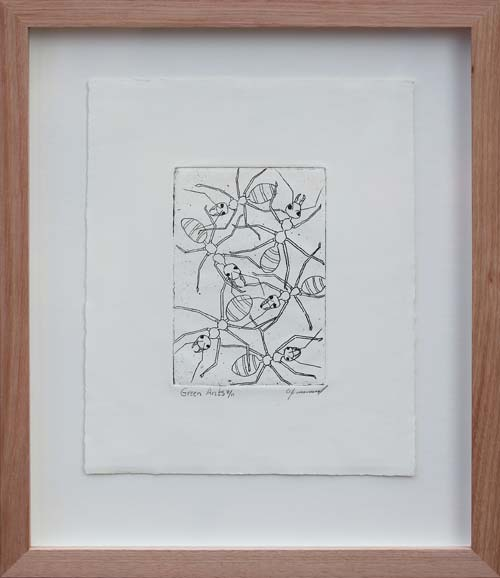 Allan Mansell Green Ants 8/11 2004 Etching on artists paper