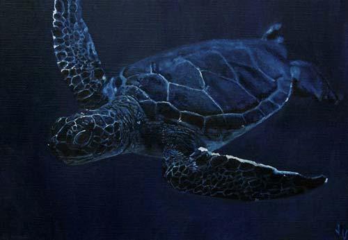 Turtle Jeska Valk