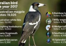 Australian Bird of The Year (Birdlife Australia)