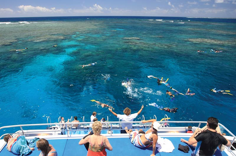 Calypso Snorkelling Reef Tours