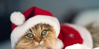 Christmas Pets (Image Source: Somepets), www.crowdink.com, crowdink, crowd ink