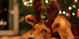 Holiday Pets (Image Source Healthy Spot), crowdink.com, crowd ink, crowdink