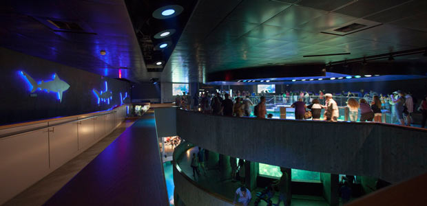 New England Aquarium in Boston, seaworld, water, animals, crowdink.com, crowdink.com.au, crowd ink