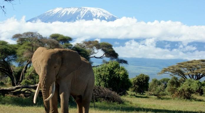 Mount Kilimanjaro, crowdink.com, crowdink.com.au, travel, adventure, africa, explore