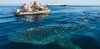 Galapagos Island, crowdink.com, crowdink.com.au, crowdink, crowd ink