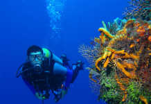 Zen Resort Scuba Diving, crowdink.com, crowdink.com.au, crowd ink, crowdink, travel, lifestyle