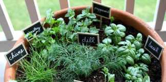Indoor Herb Garden Ideas (Image Source: pionnersettler.com), crowdink.com.au, crowdink.com, crowd ink, crowdink