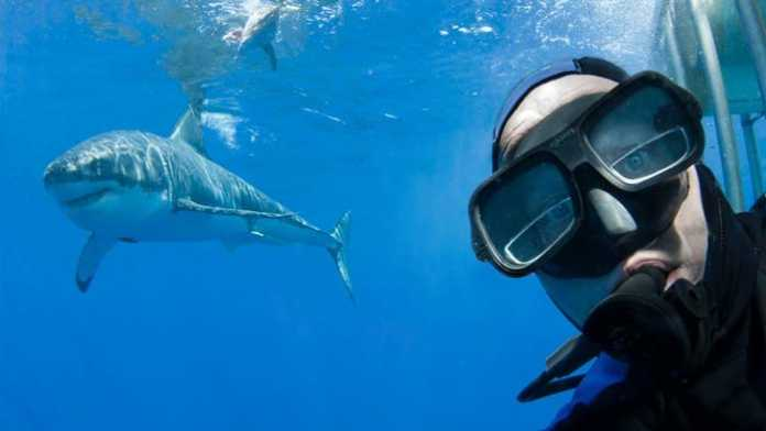 Shark Selfies (Image Source: YouTube), crowdink.com, crowdink.com.au, crowd ink, crowdink