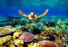 Great Barrier Reef (Image Source: Pinterest), crowdink.com, crowdink.com.au, crowd ink, crowdink, travel, great barrier reef