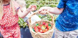 Sunny Ridge Strawberry Farm, crowdink.com, crowdink.com.au, crowd ink, crowdink