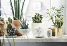Indoor Plants, crowdink.com, crowdink.com.au, crowdink, crowd ink