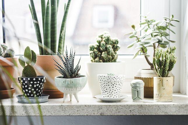 Indoor Plants, crowdink.com, crowdink.com.au, crowdink, crowd ink