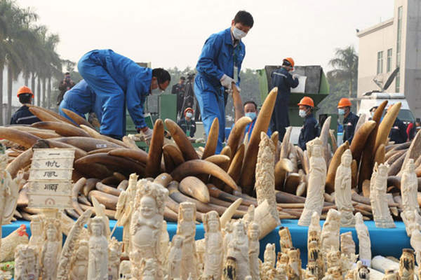 Animal Activists Rejoice As China Commits to a Ban on Ivory crowdink.com, crowdink.com.au, crowd ink, crowdink
