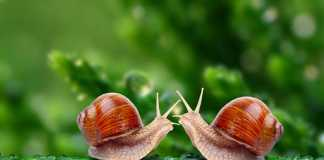 snails, crowdink.com, crowdink.com.au, crowd ink, crowdink