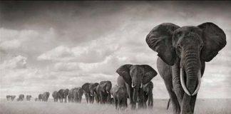 World Elephant Day, crowdink.com, crowdink.com.au, crowd ink, crowdink