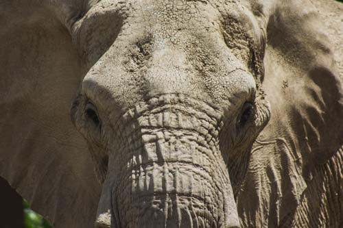 Ban on Imported Elephant Trophies