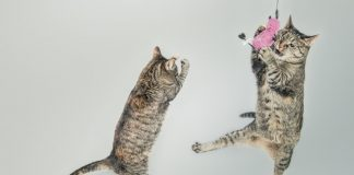 An Old Cat Can Learn New Tricks